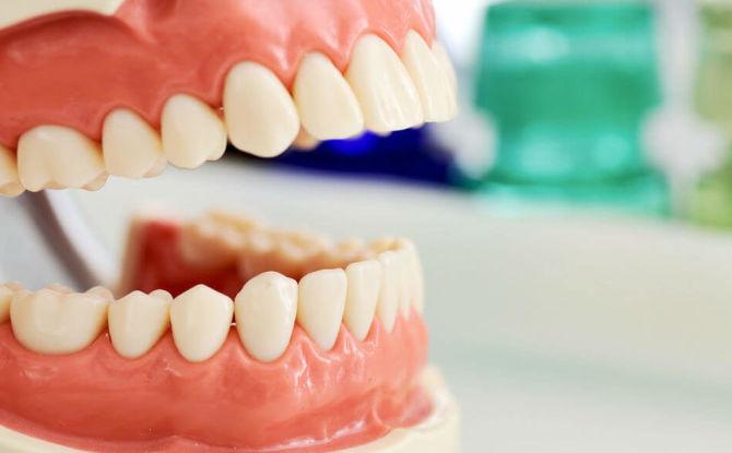 Названия и схема расположения зубов у взрослых и детей
