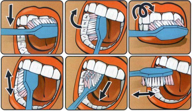 Инфографика как правильно чистить зубы