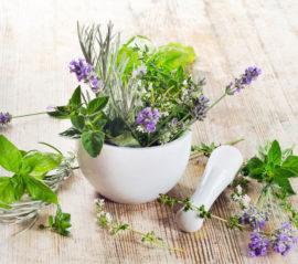 Лекарственные растения с обезболивающим действием