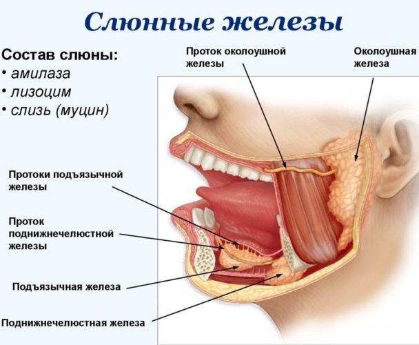 Соленые губы что за симптом