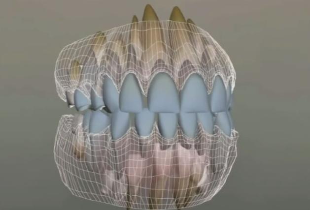 Схема молочные зубы
