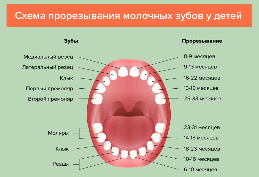 Последовательность прорезывания зубов у ребенка 1 года жизни 30