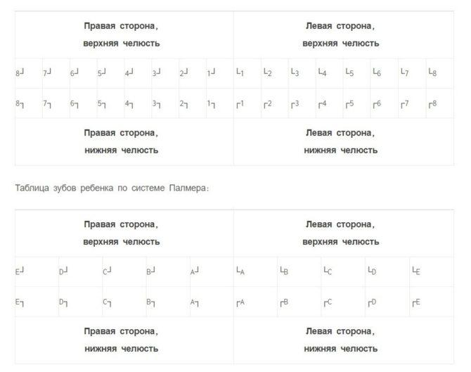 Схема зубов с номерами у взрослых и детей по Палмеру