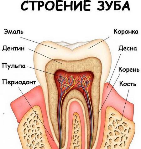 Гнойное воспаление корня зуба лечение thumbnail