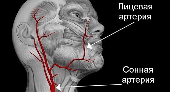 Трифуркация сонной и лицевой артерии